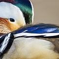 Mandarin Closeup by Michael Hampton
