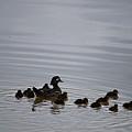 Mandarin Duck And Babes 20130508_230 by Tina Hopkins