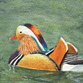 Mandarin Duck by Lynn Quinn