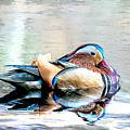Mandarin Duck On The  Pond - Sketch by Ericamaxine Price