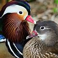 Mandarin Mates by Spade Photo