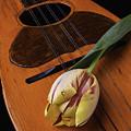 Mandolin And Tulip by Garry Gay