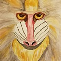 Mandrill Monkey by Maria Urso