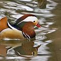 Mandrin Duck With A Purpose by Douglas Barnett