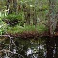 Mangrove     Wild by Florene Welebny