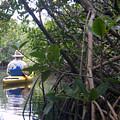 Mangrove Kayaker by Steven Scott