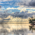 Mangrove Mirrored Dreams by Ronald Kotinsky