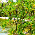 Mangrove Pods by Marilee Noland