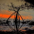 Mangrove Silhouette by David Lee Thompson