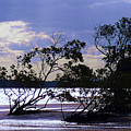 Mangrove Silhouettes by Trudee Hunter