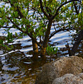 Mangroves And Coquina by Julianne Felton