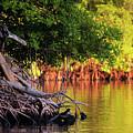 Mangroves Of Roatan by Doug Sturgess