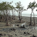 Mangroves by Tanmoy Bhattacharjee