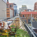 Manhattan High Line by Madeline Ellis