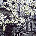 Manhattan Spring by Sarah Loft