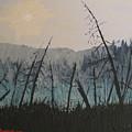 Manitoulin Beaver Meadow by Ian  MacDonald