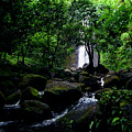 Manoa Falls Stream by Kevin Smith