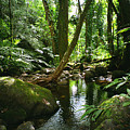 Manoa Valley Stream by Kevin Smith