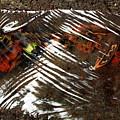 Manoa's Fallen by Jennifer Bright