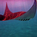 Manta Sailing by Bette Phelan