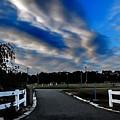 Mantua Park by Carol McGinn