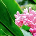Many Pink Petals by Daniel Murphy