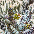 Many Stems Of Poky Small Cactus In Desert by Alex Grichenko