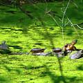 Many Turtles Along The Appalachian Trail by Raymond Salani III