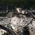 Many Webs by Linda Kerkau