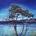 Manzanita At Lake Hemet by Jiji Lee