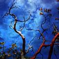 Manzanita by Timothy Bulone