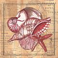 Map And Shells by Debbie DeWitt