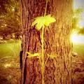 Maple Branch Growing From Trunk by Debra Lynch