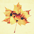 Maple Leaf by Andrea Anderegg