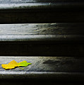 Maple Leaf On Step by Sheila Smart Fine Art Photography