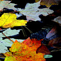 Maple Leaves-0011 by Sean Shaw