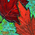 Maple Leaves by Wayne Potrafka