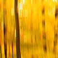Maple Magic by Bill Morgenstern