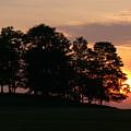 Maple Sunset by Natalie LaRocque