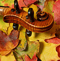 Maple Violin Scroll On Fall Maple Leaves by Anna Lisa Yoder