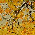 Maples In Autumn by Carolyn Doe