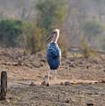 Marabou Stork Of Botswana Africa by Sherri Hubby