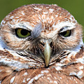 Marco Burrowing Owl - I Know What You're Thinking by Ronald Reid