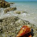Marco Island South Beach by Joey Waves
