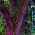 Mardi Gras Tree by Henry Eastman