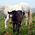 Mare And Colt by Joseph Gilbertie