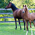 Mare And Colt by Michael Barry
