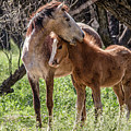 Mare And Colt by Teresa Wilson