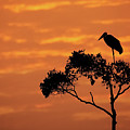 Maribou Stork On Tree With Orange Sunrise Sky by Susan Schmitz