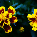 Marigold In Living Color by Debra Lynch
